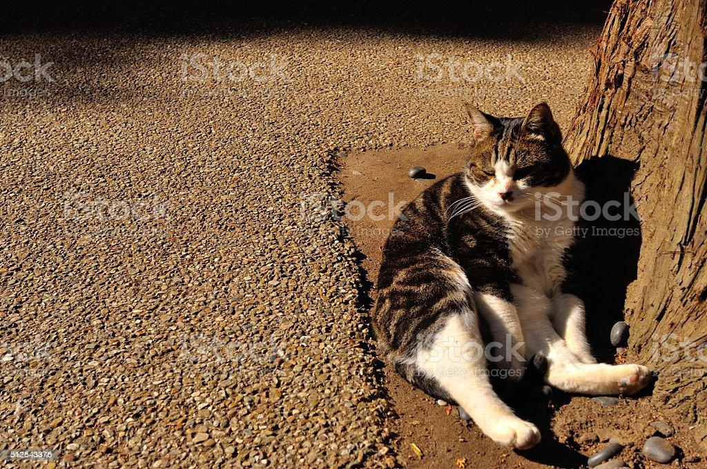Gato foto de stock royalty-free