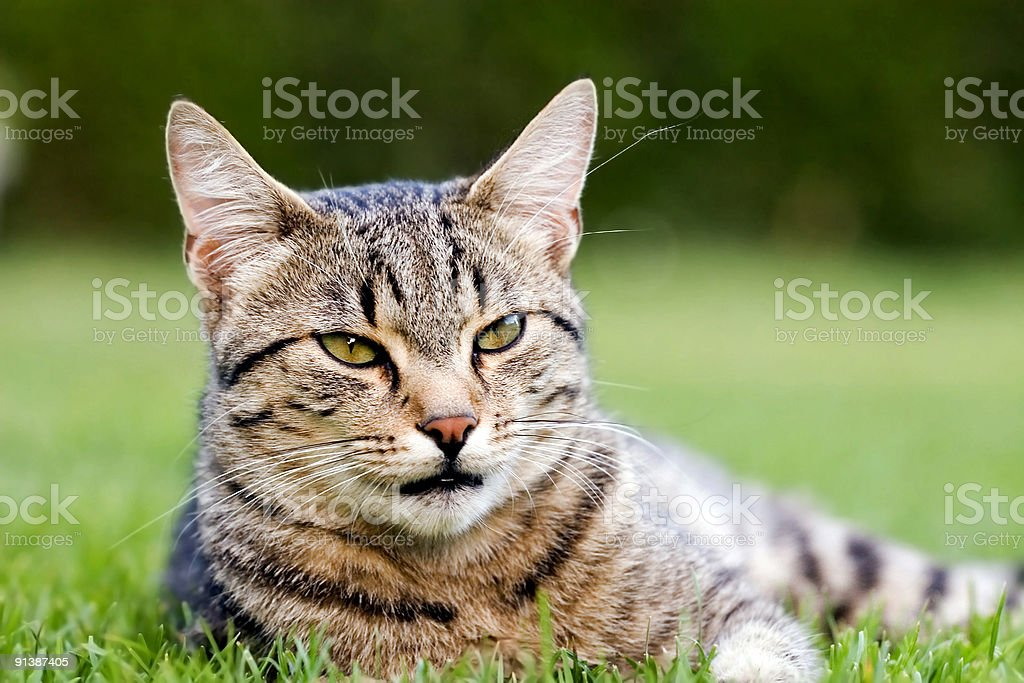 Cat royalty-free stock photo
