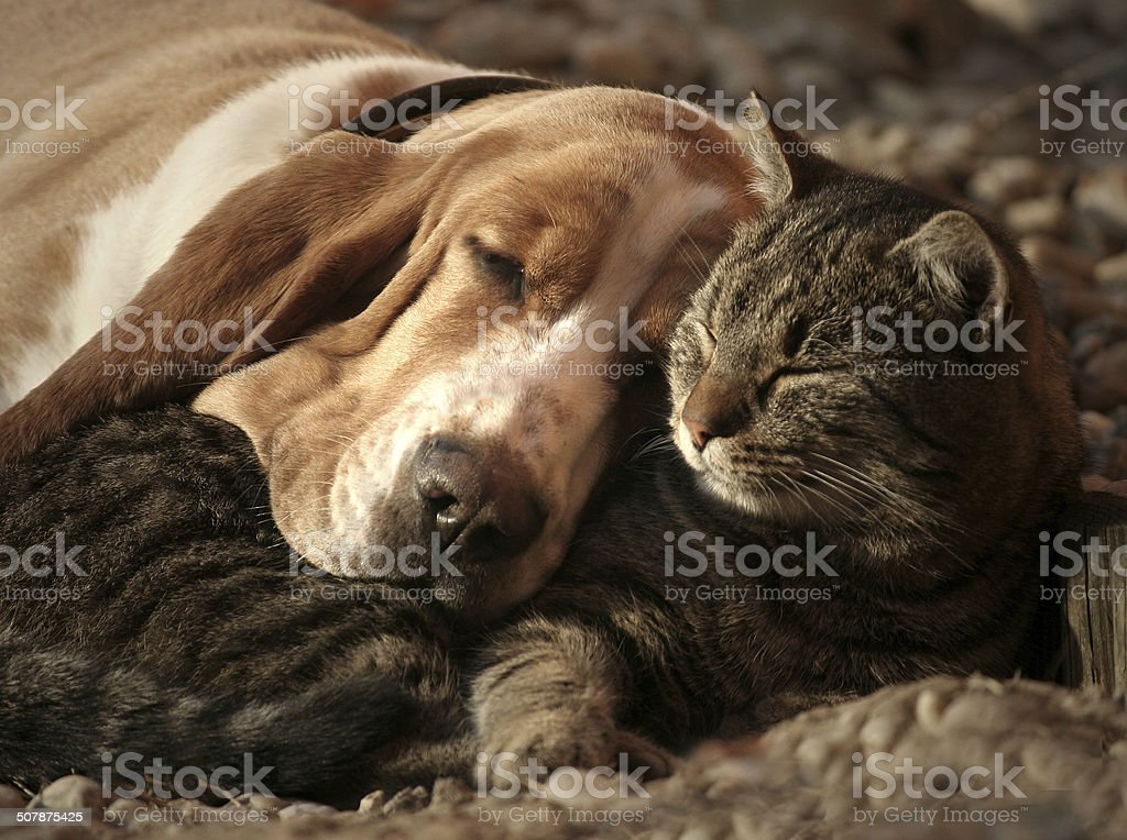 Cat pillow, dog blanket stock photo