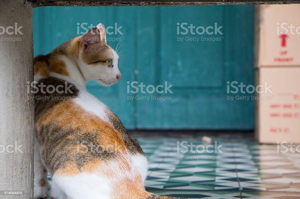 Кошка планирует смотрим вперед. Стоковые фото Стоковая фотография