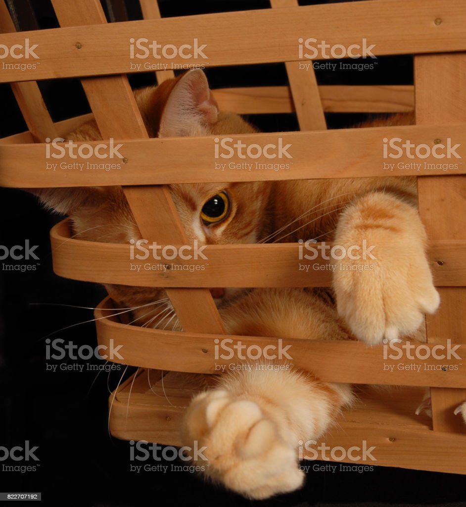 Cat Play stock photo