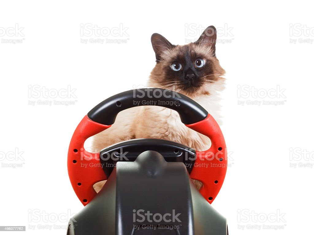 Cat playing a video game console, isolated on white stock photo