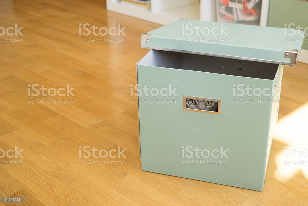 Cat playing hide and seek in a box stock photo