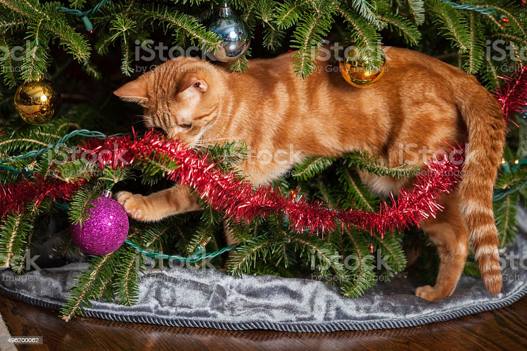 Cat playing in Christmas tree stock photo