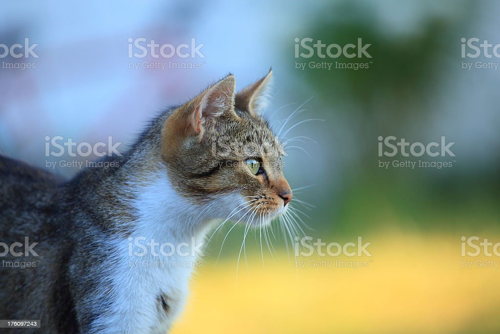 Cat playing on the grass stock photo