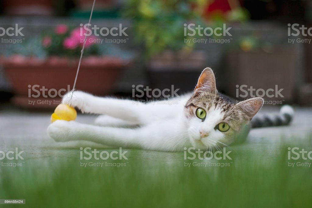 Cat playing on the ground stock photo