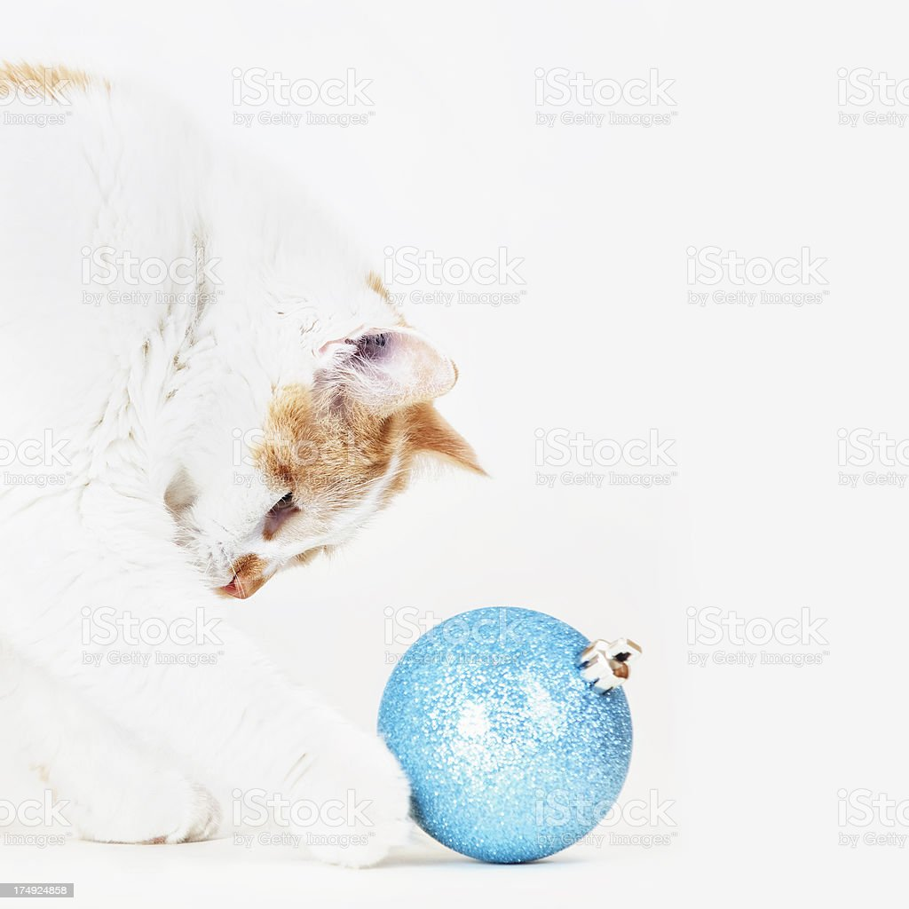 Cat Playing with Christmas Bauble royalty-free stock photo