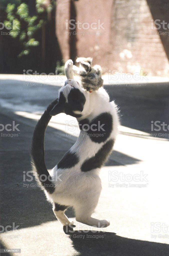 Gato jugando con ratón 1 foto de stock libre de derechos