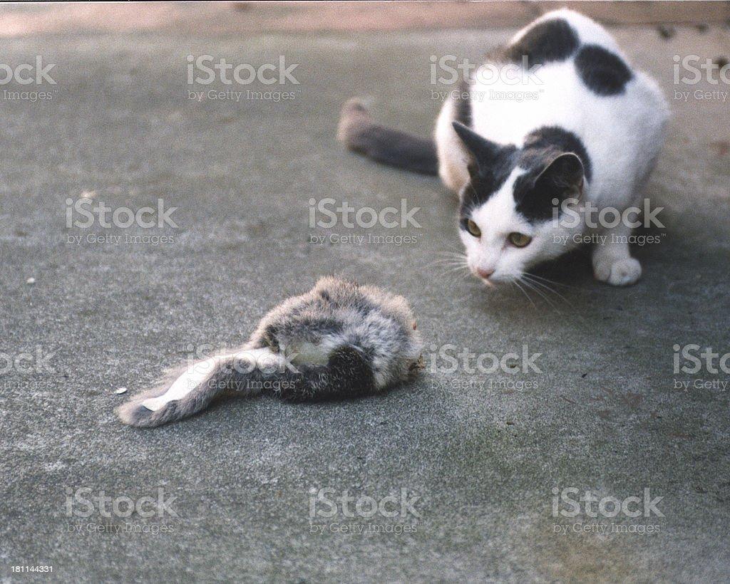 Gato jugando con Ratón de 2 foto de stock libre de derechos
