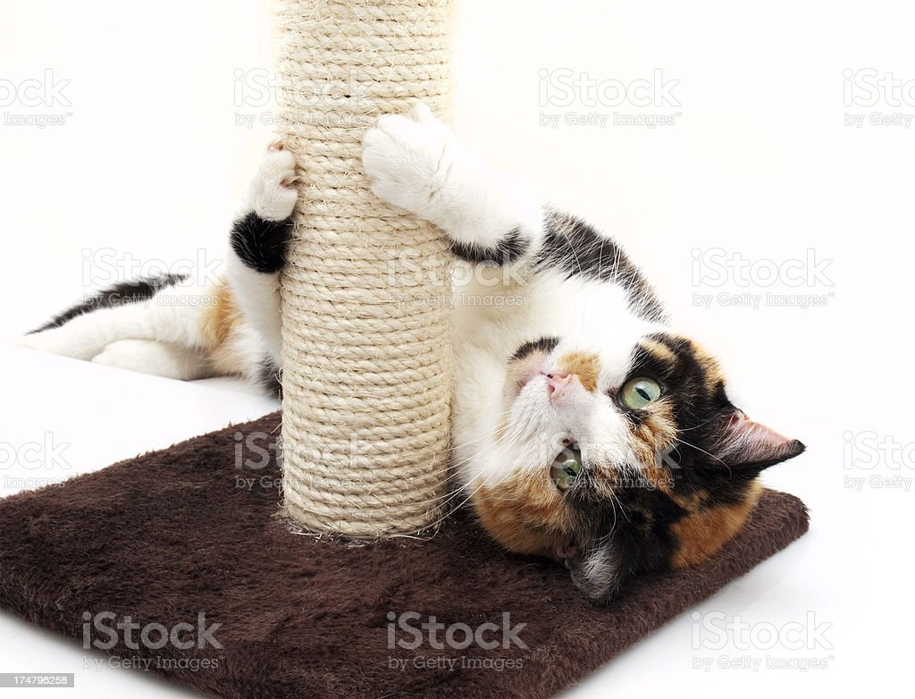 Cat Playing with Scratching Post stock photo