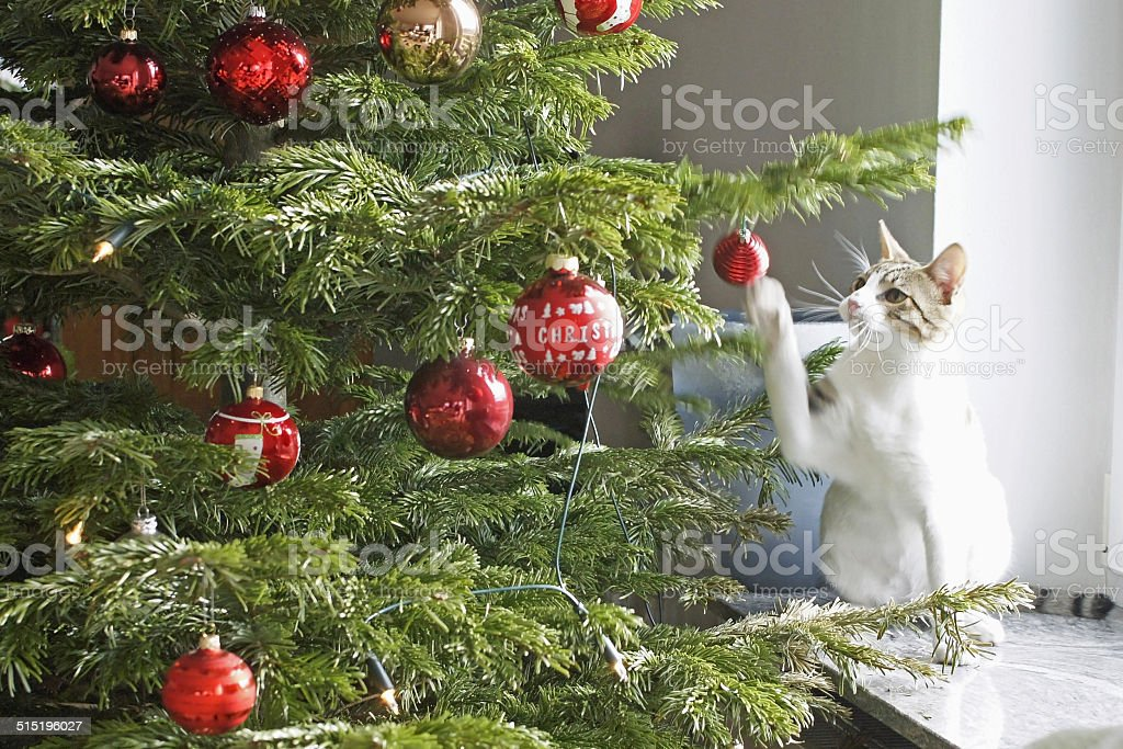 Cat playing with the christmas tree stock photo
