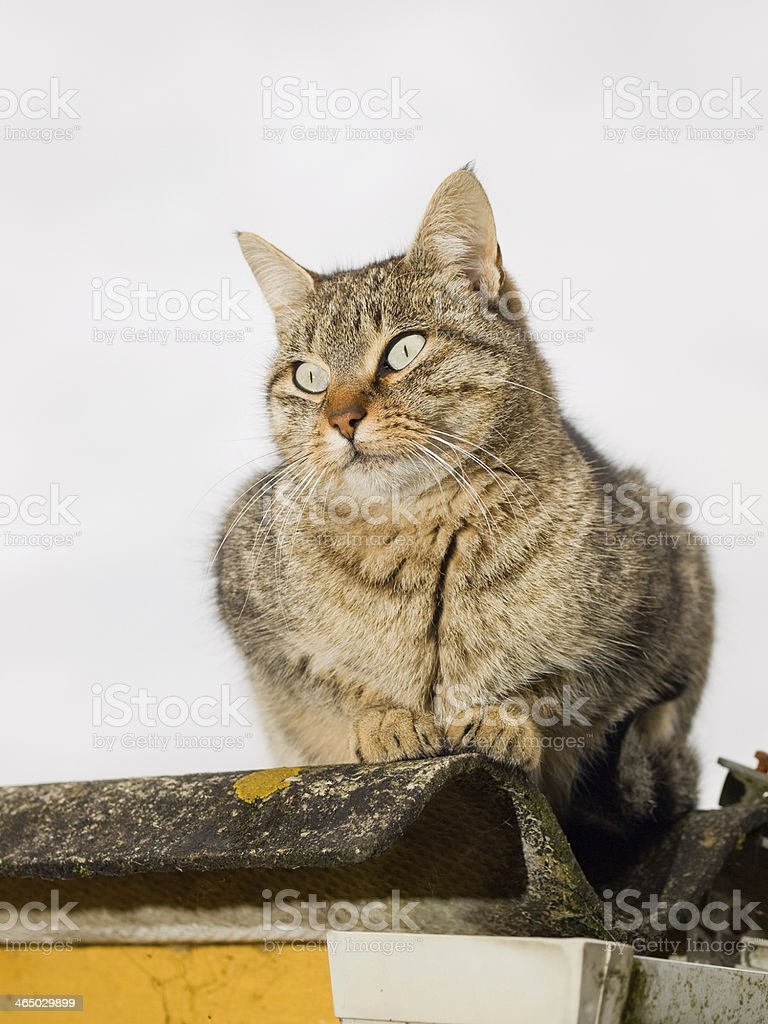 Cat portrait outdoors stock photo