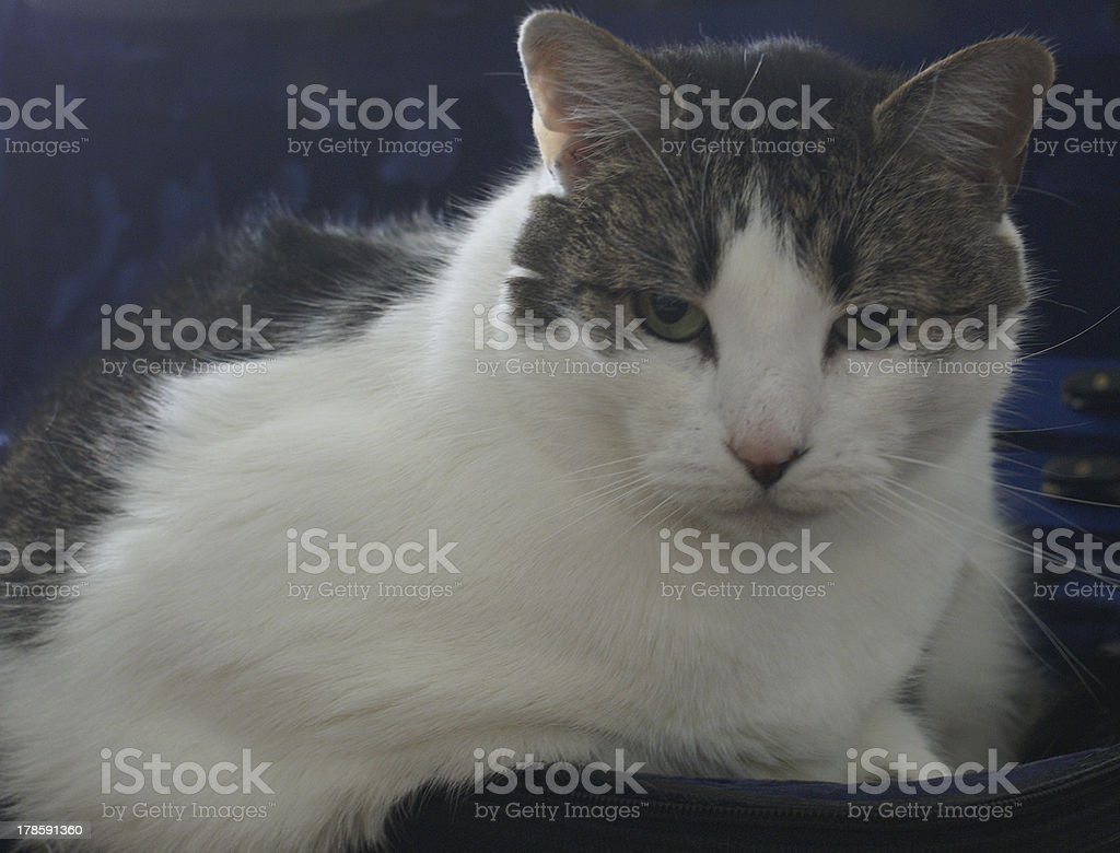 Cat portrait with built-in copy space stock photo