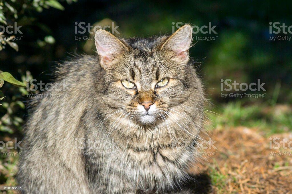 Cat Portre stock photo