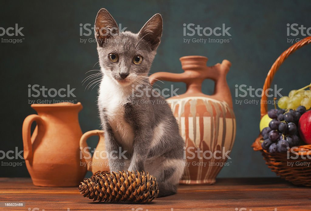 Cat posing for in the studio royalty-free stock photo
