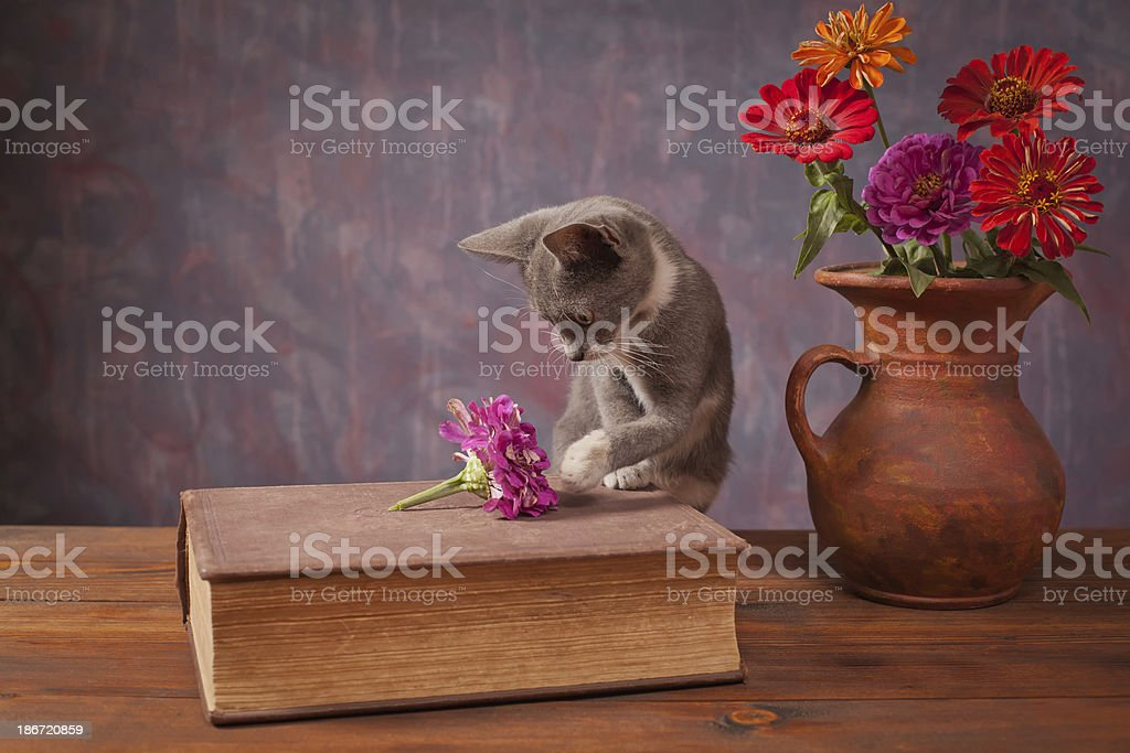 Cat posing next to flowers in a vase royalty-free stock photo
