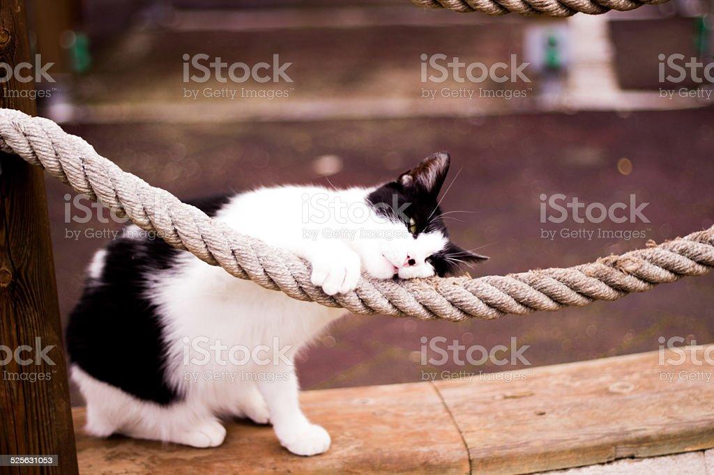 Cat Preparing to Sleep stock photo