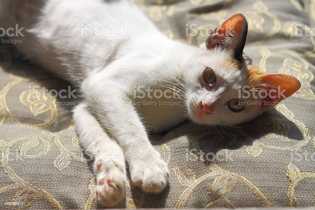 Kot ładna zbiór zdjęć royalty-free