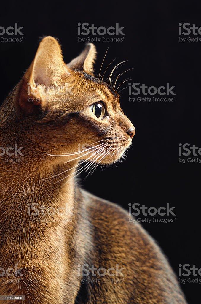 Cat Profile stock photo