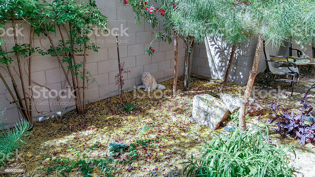 Cat Puzzled by the Spring Mess stock photo