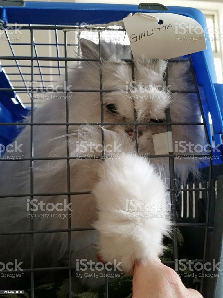 Cat reaching out to owner at the vet stock photo