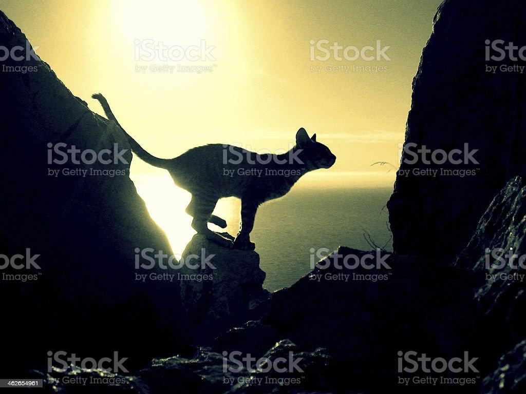 Gato pronto para dar um salto em rocky ridge foto de stock royalty-free