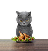 Cat refused to eat chicken