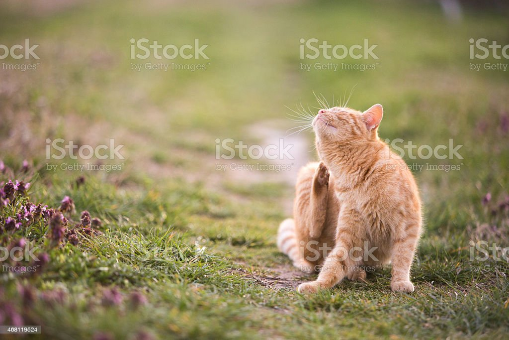 Cat relaxes in the garden stock photo