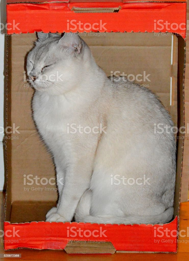 Cat relaxing in a cardboard box stock photo