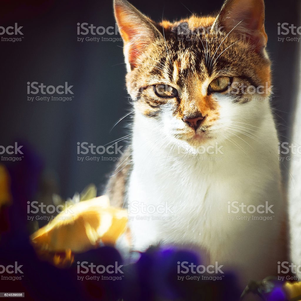 Cat relaxing in Autumn sunlight among flowers stock photo