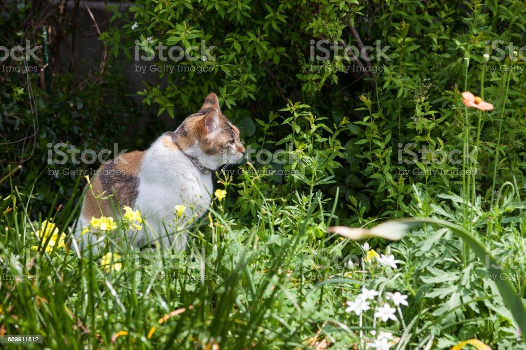 Cat relaxing in the garden. stock photo