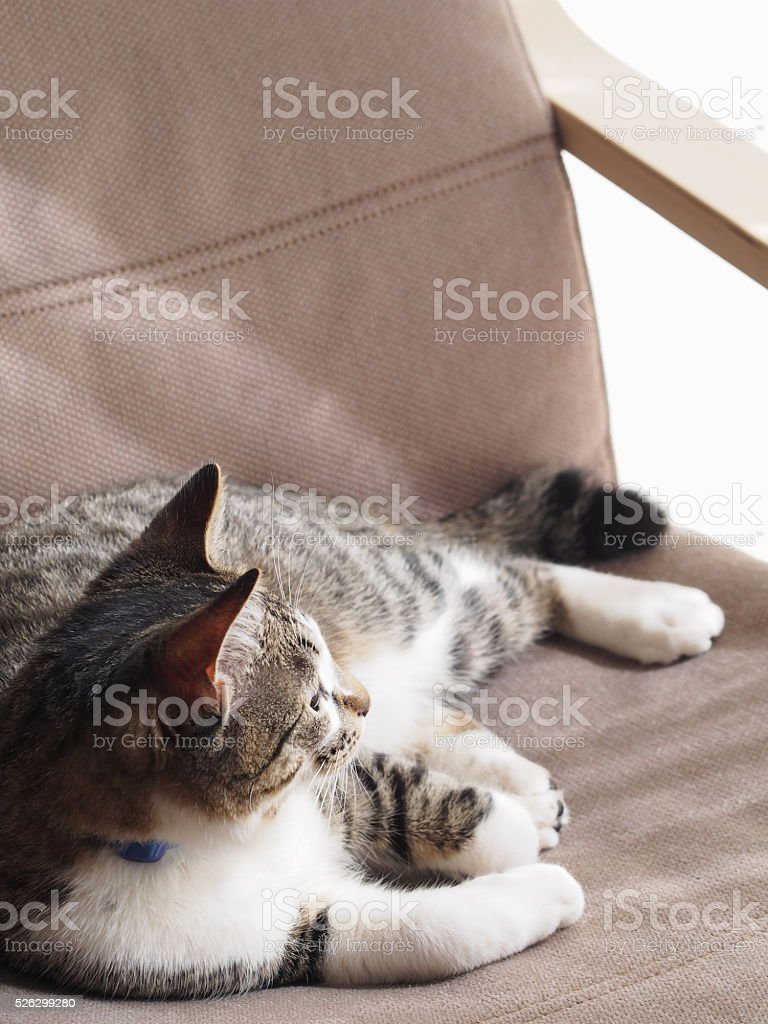 Cat relaxing on a chair stock photo