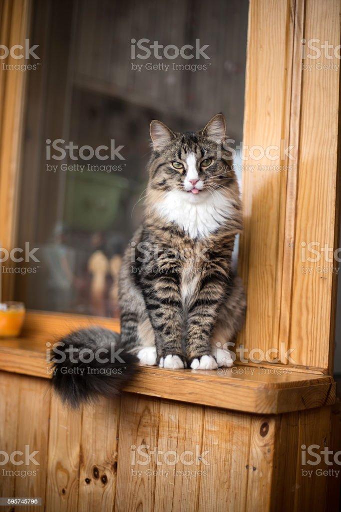 Cat relaxing on windowsill stock photo