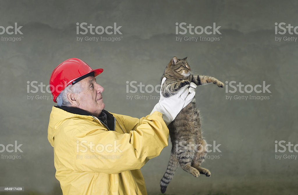 Cat rescue stock photo