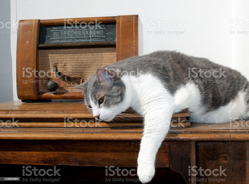Cat Resting by Old Radio on Sawing Machine royalty-free stock photo