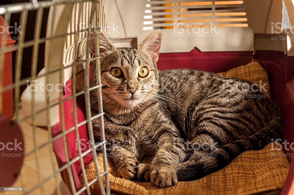 Cat resting in a pet carrier stock photo