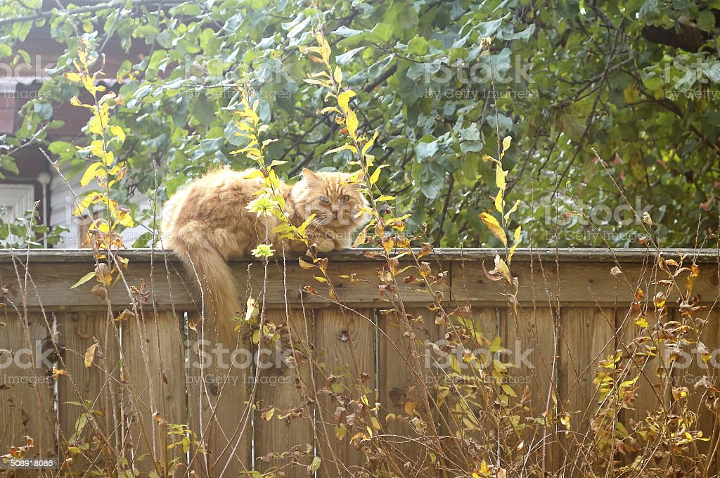 Cat resting on a fence stock photo