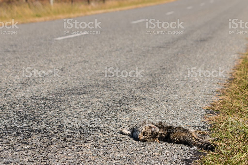 cat roadkill lying on side of road stock photo
