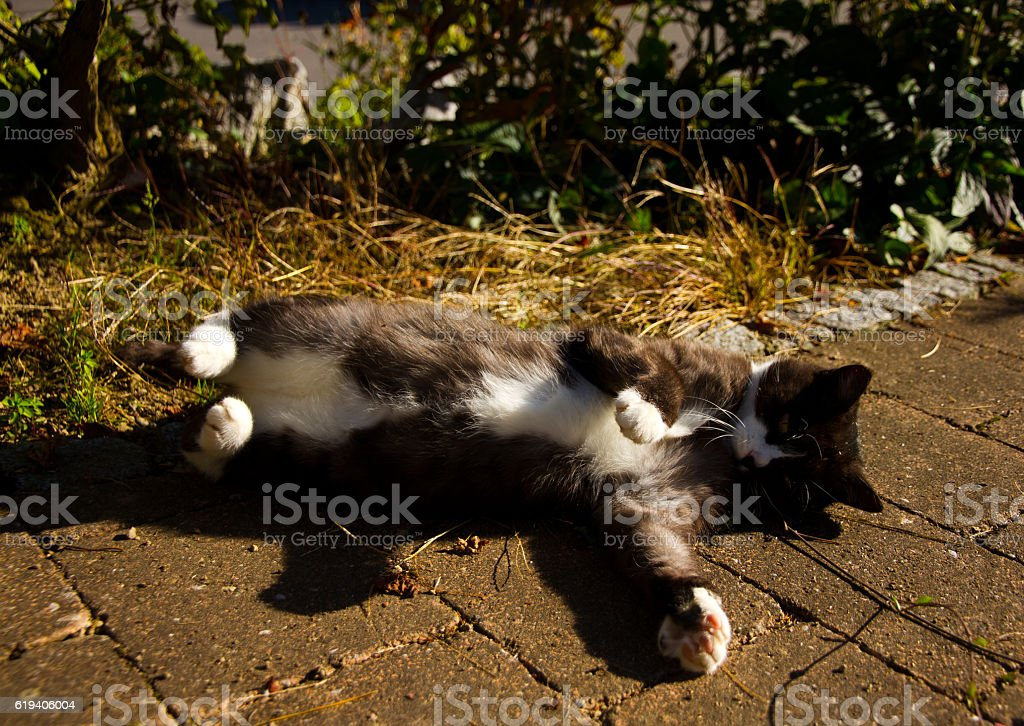 Cat rolls around in the sun stock photo