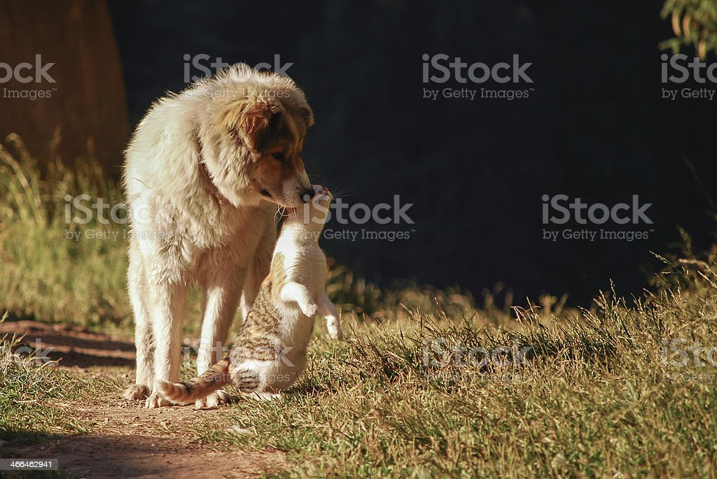 Cat rubbing face against dog in the outdoors royalty-free stock photo