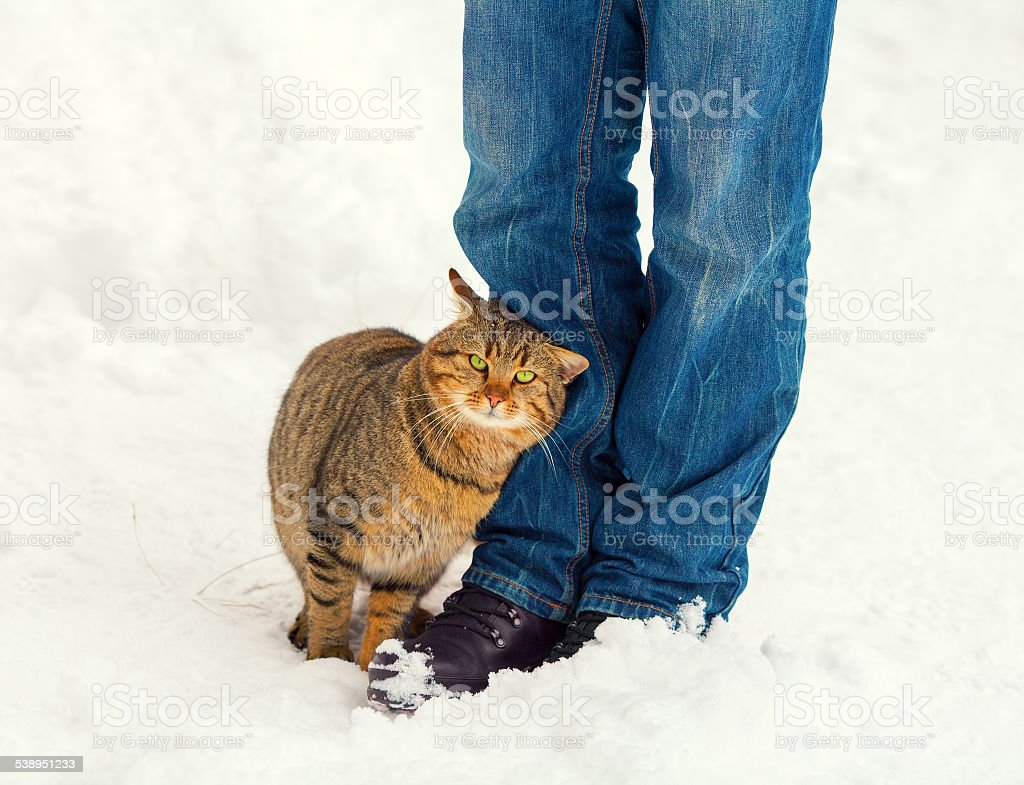 Cat rubs against the legs of a man stock photo