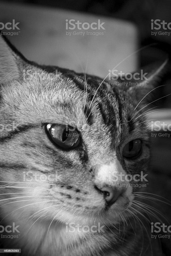 cat sadly stock photo