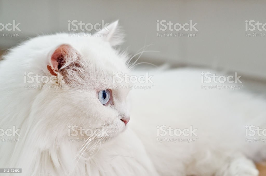 cat scared stock photo