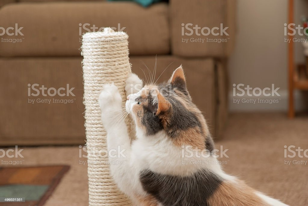 Cat Scratching Closeup stock photo