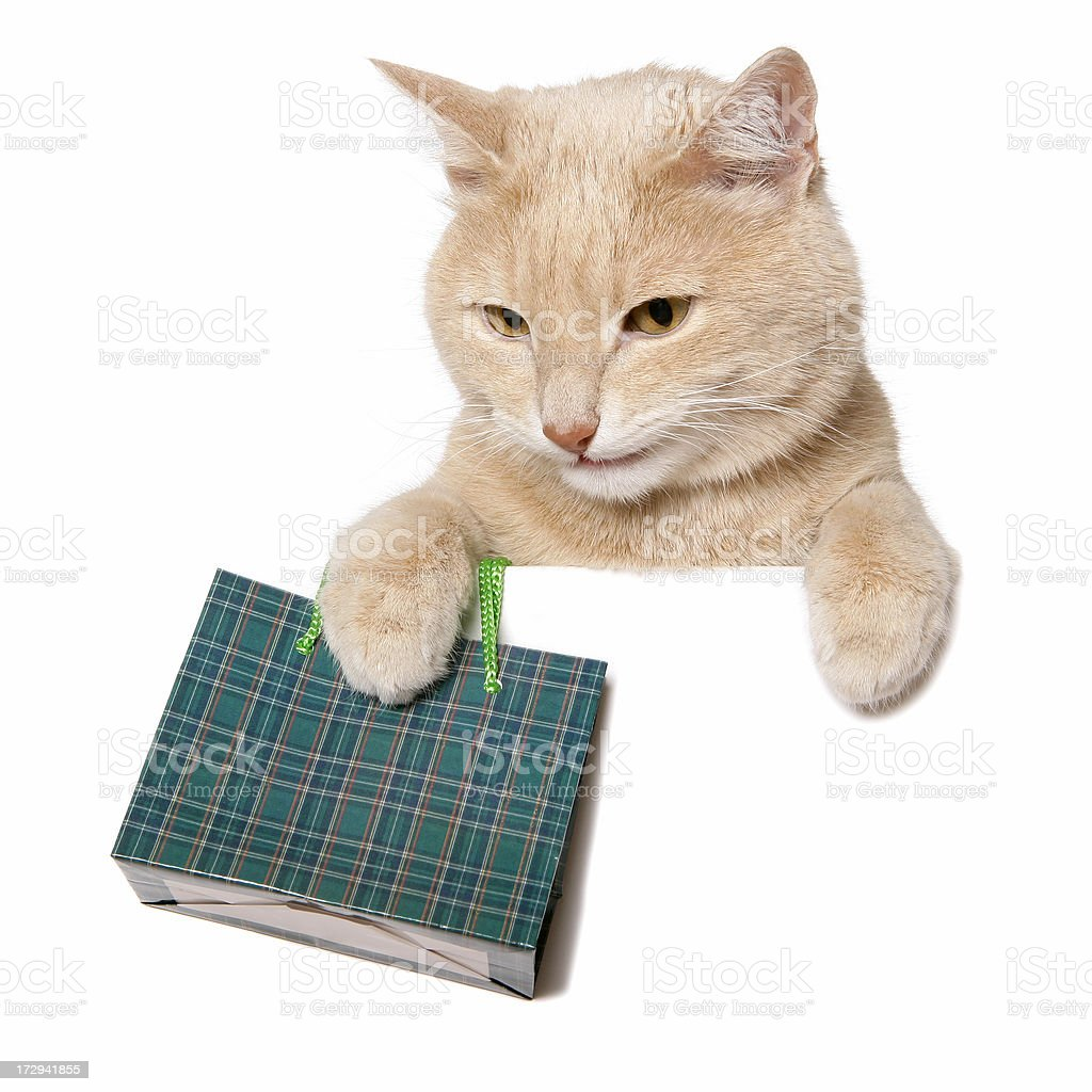Cat Shopping (Blank Sign) royalty-free stock photo