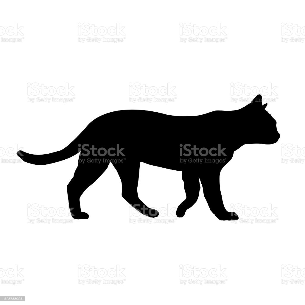 Cat silhouette isolated on white stock photo