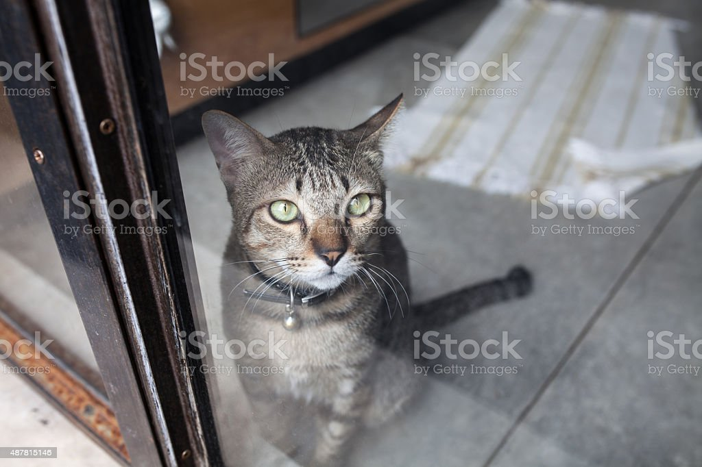 cat sit near window stock photo