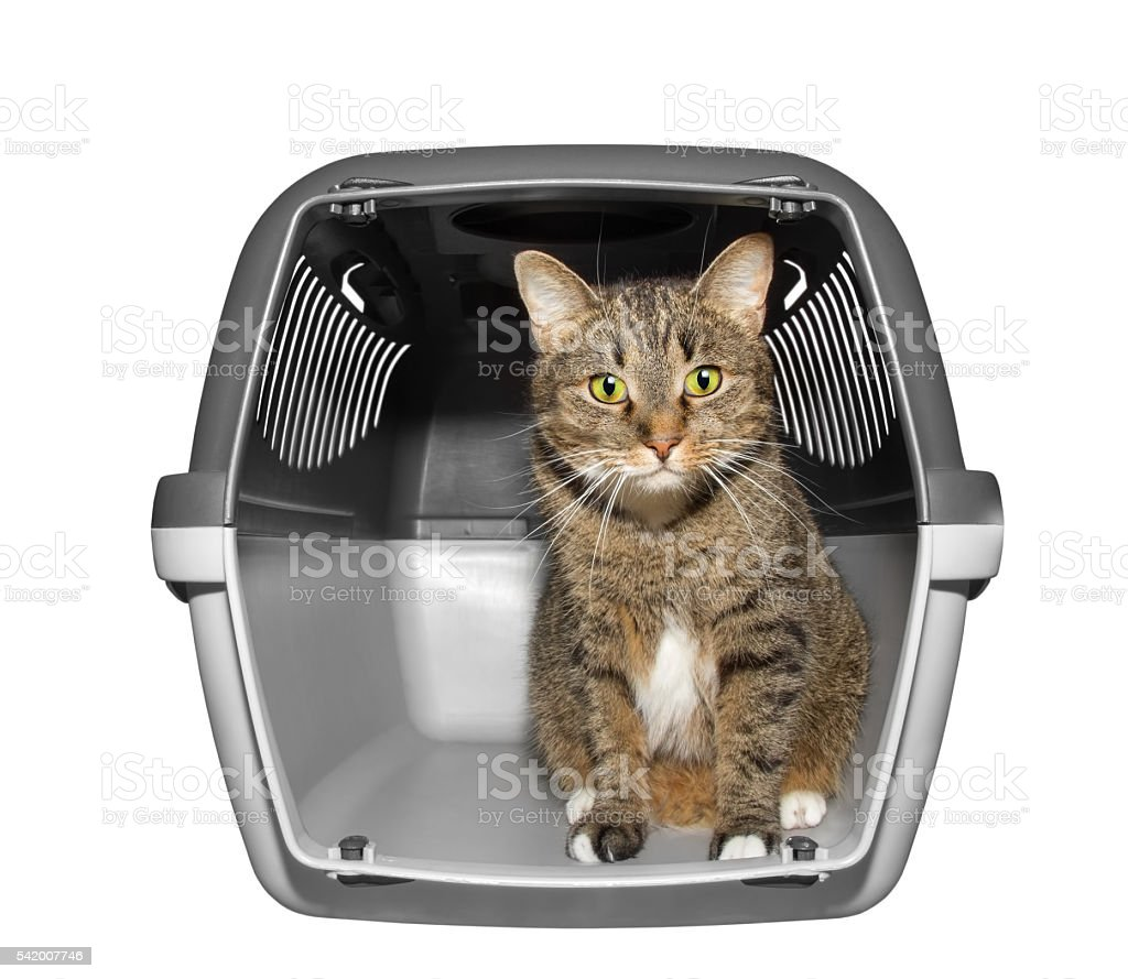 Cat sits in transportation box stock photo