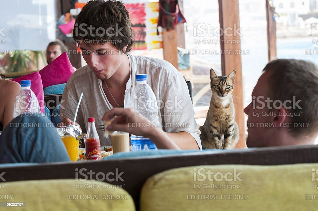 Cat and people at restaurant royalty-free stock photo