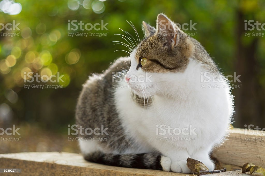 Cat sits on wood planks with fallen leaves stock photo
